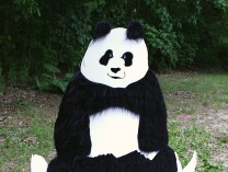 A photo of 'Yoga Bear'