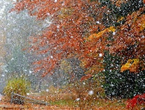 Photo of Fall Snow