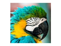 Photo of Magnificent Macaw