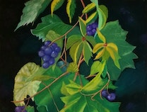 Photo of Wild Grape Leaves