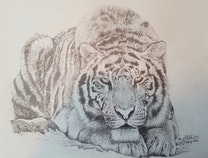 Photo of Nature in Pencil