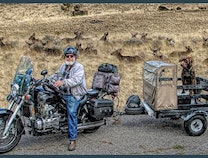 Photo of Pickles & Fred-Fun motorcyclist & dog portrait