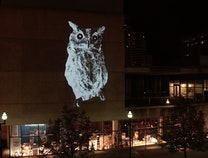 Photo of Animal Land: ArtPrize 10