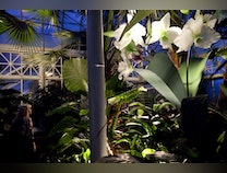 Photo of Botanical Exotica a Monumental Collection of the Rare beautiful