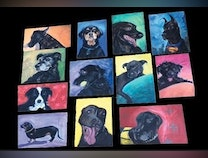 Photo of The Colorful Black Dog