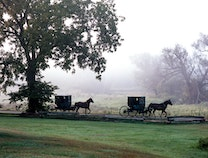Photo of Amish Buggies on a Misty Morning