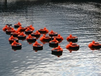 Photo of SOS (Safety Orange Swimmers)