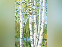Photo of Birch Trees on the Lake