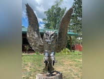 Photo of Silver owl